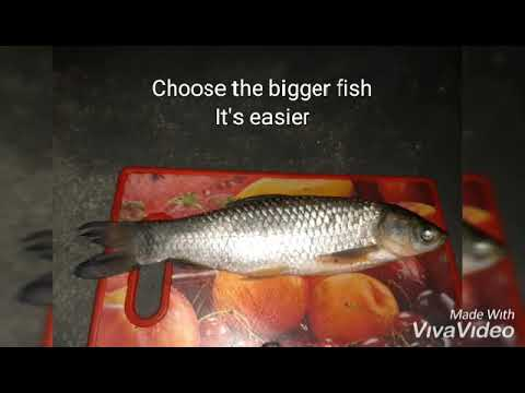 How To Skeletonize Fish? Procedures