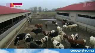 видео Молочная отрасль.