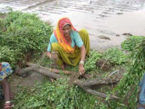 Henna Plantation Sm Heena Industries Rajasthan Youtube