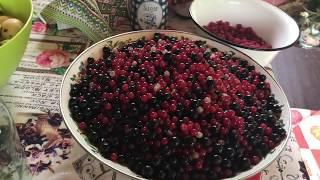 Как сделать вино из яблок и ягод / в домашних условиях