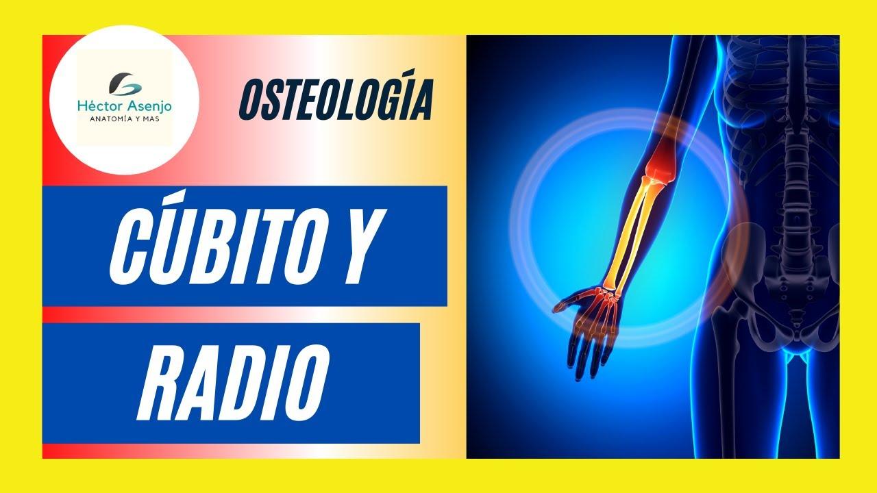 Huesos del Antebrazo (cúbito y radio) - YouTube