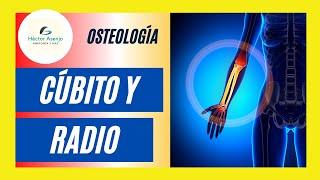 Gambar cover Huesos del Antebrazo (cúbito y radio)
