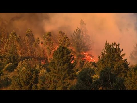 Chile forest fire ravages 50 hectares, destroys homes