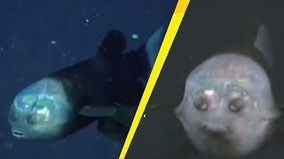 5 Strangest Things Caught At The Bottom Of The Mariana Trench!#2