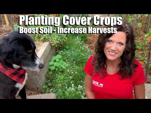 Planting Cover Crops – Boost Soil & Increase Harvest for Next Spring's Garden/Feeding Your Garden #1