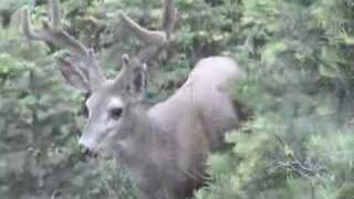 Buck outside the trailer
