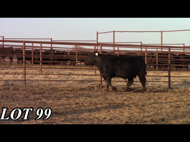Mead Angus Farms Lot 99