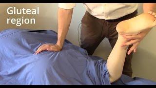 Massage Tutorial: Gluteal region (gluteus maximus, piriformis, sciatica)