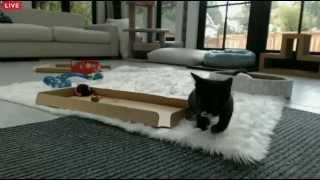 Tiny Kittens Cassidy