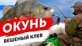 ВЫРЫВАЮТ УДОЧКУ ИЗ РУК Бешеный клев окуня Рыбалка весной с лодки