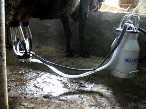 Cow Milking Machine India Video By Milkwell