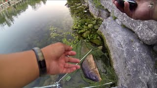 carp on a fly sage approach 8wt fly fishing 8 8 14