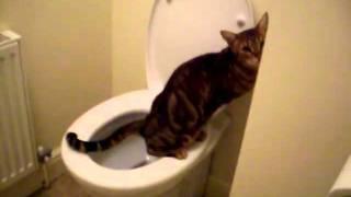 Cat toilet training?