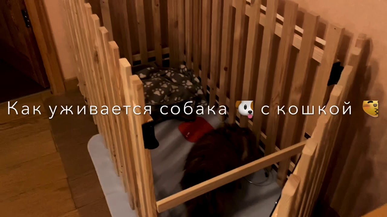 Вестерн# как уживается собака🐶 с кошкой😽 - YouTube