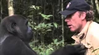 Uzun Yıllar Sonra Sahibini Gören Gorilden Duygu Dolu Anlar