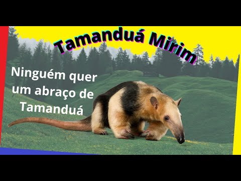 Tamanduá Mirim