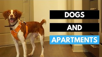 Having a Dog in an Apartment - Quick Tips