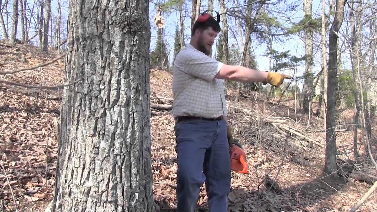 logging etool felling trees potential hazards - HD1920×1080