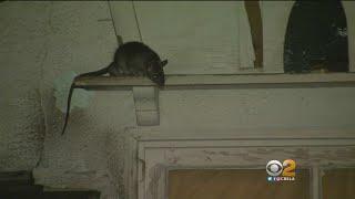 Van Nuys Neighborhood Terrorized By Rat 'infestation'