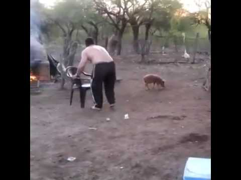 Hombre se folla a un cerdo