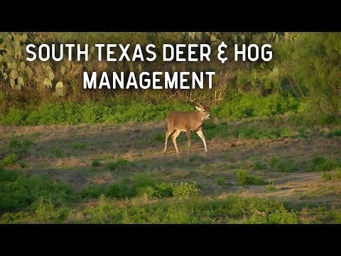 South Texas Deer And Hog Management
