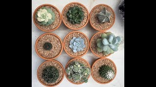 Update on the succulent greenhouse/ repotting some succulents/ cleaning the succulent garden 11/11