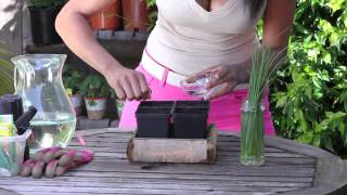 How to Get Chives to Germinate : The Chef's Garden