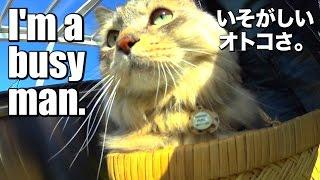 Cat HAL pretends he is busy! / 猫、オフ会の下見で忙しぶる=^_^=