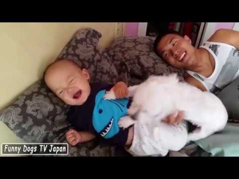 Maltese Dog Steals From Baby! - Baby vs toy Maltese