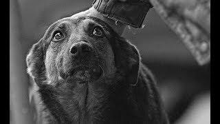 В Вологде депутаты и зоозащитники разрабатывают закон о содержании животных
