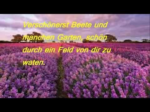 Mein vierzehntes Gedicht  Der Lavendel  YouTube