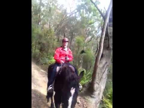 Horseriding In Darkes Forest, Sydney, NSW