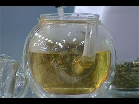 Чайный гриб - польза и вред. Противопоказания, полезные