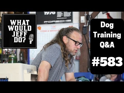 dog-training---crate-training-dogs---stop-dog-barking---what-would-jeff-do?-q&a-ep.583-(2019)