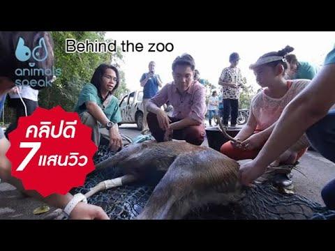 Animals Speak [by Mahidol] Behind the zoo