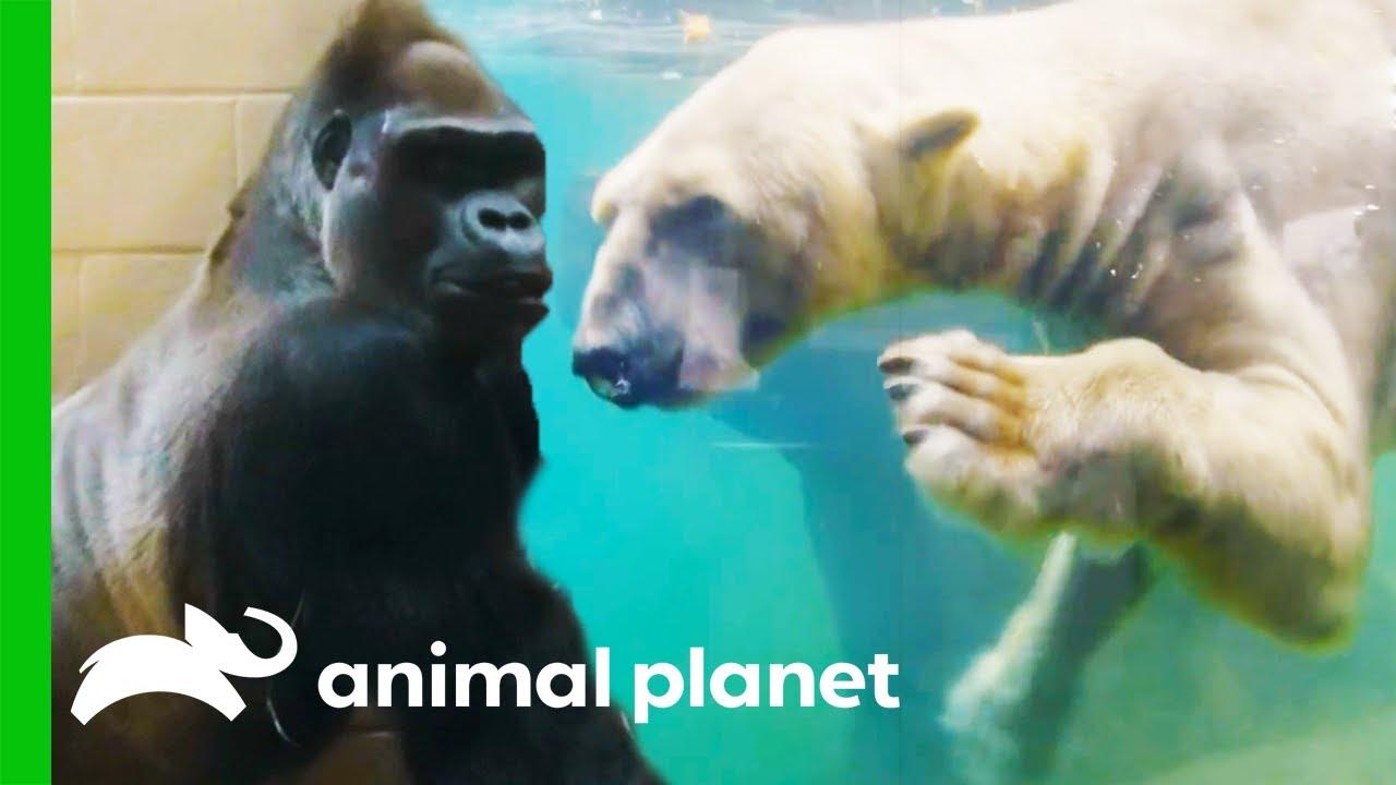 Download The Most Dangerous Zoo Inhabitants   The Zoo