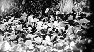 The Love Flower (1920)