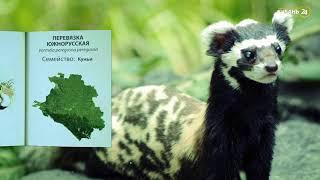 «Красная книга Кубани». Перевязка южнорусская