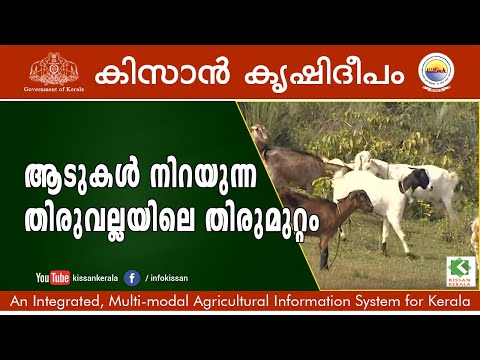 Documentary on a successfully managed goat rearing unit in Thiruvalla, Pathanamthitta district