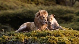 ドナルド・グローヴァー&ビヨンセが『ライオン・キング』の名曲「愛を感じて」を歌い上げる