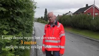 Statens vegvesen - klipp hekk og busker