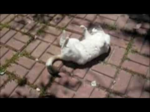 "Funny Cats — Cat ""Dances With Bricks"""
