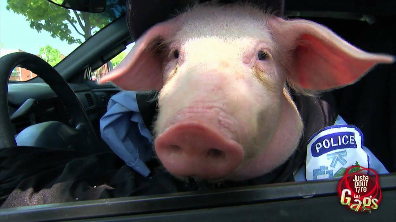 Gag policier tr s cochon youtube - Queue de cochon outil ...
