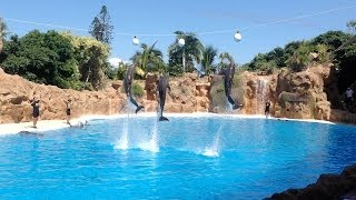 Loro Parque Dolphin Show 2013