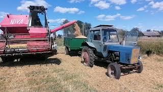 Уборочная в Белорусской глубинке зерноуборочный комбайн СК-5 нива самодельная сеялка и трактор