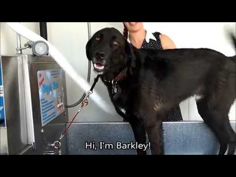 Boots barkley at the dog wash 625 adelaide st n london auto boots barkley at the dog wash 625 adelaide st n london auto spa self serve car wash dog wash solutioingenieria Images