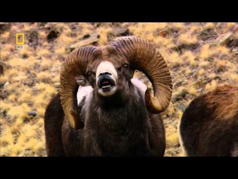 Дикая природа России - [1_6] Сибирь - Видео с YouTube на компьютер, мобильный, android, ios