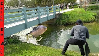 GIANT PIRANHA FISH Caught in COLLEGE CAMPUS POND!