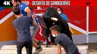Image del Video: TOROS: Nuevo desafío con toros y vacas en Sarrión
