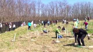 Sierra Club Ontario - Birchwood Park Tree Planting Thumbnail